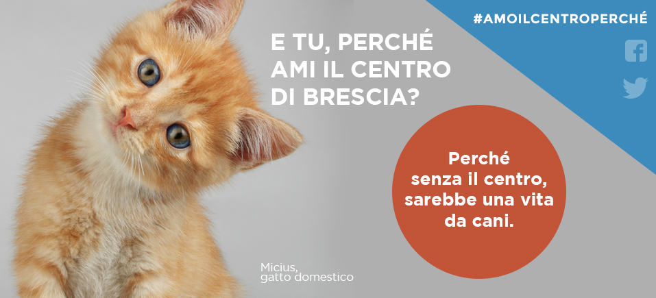 Consorzio Brescia Centro